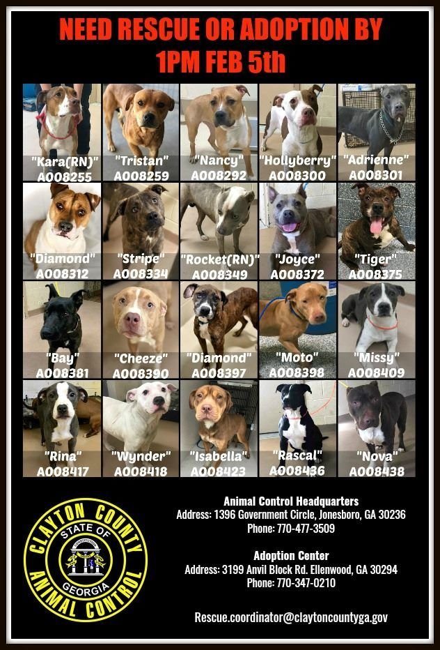 Prayers For The Souls Of These Dogs Stuck In A Georgia Kill Shelter In 2020 Dogs Pets Rescue
