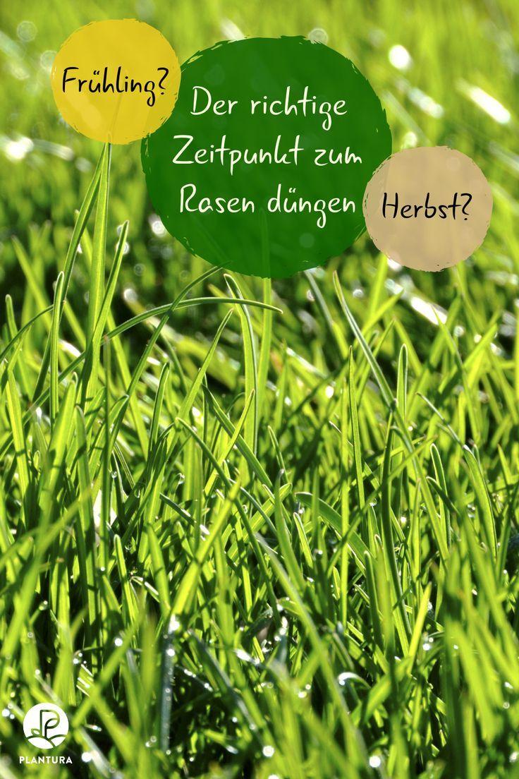 Der Richtige Zeitpunkt Zum Rasen Dungen Fruhling Oder Herbst Um Den Rasen Grun Und Dicht Zu Halten Solltet Ihr Den Richt Rasen Dungen Rasen Unkraut Im Rasen