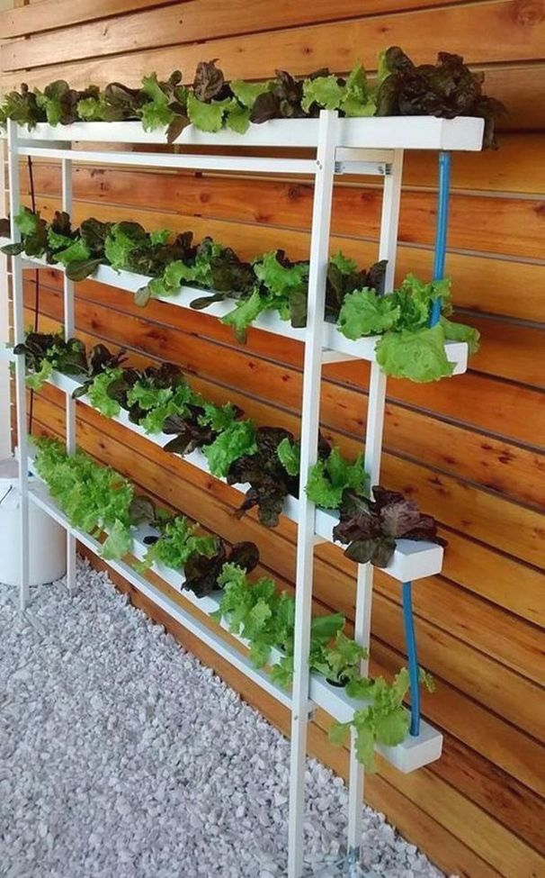 Are You Looking For Gardening Advice Read On Indoor Vegetable