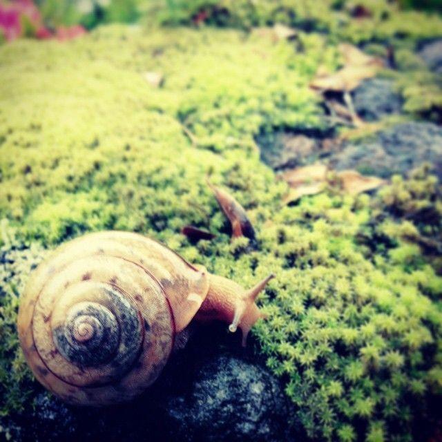 いろいろ無事完了し、道を行くカタツムリにも目が止まる。さ、原稿書こう。#由布院 #カタツムリ #yufuin #snail #rain #Japan #oita
