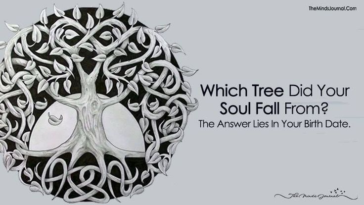 Find your birthday and then find your tree. This is really cool and accurate.Which Tree Did Your Soul Fall From? The Answer Lies In Your Birth Date.