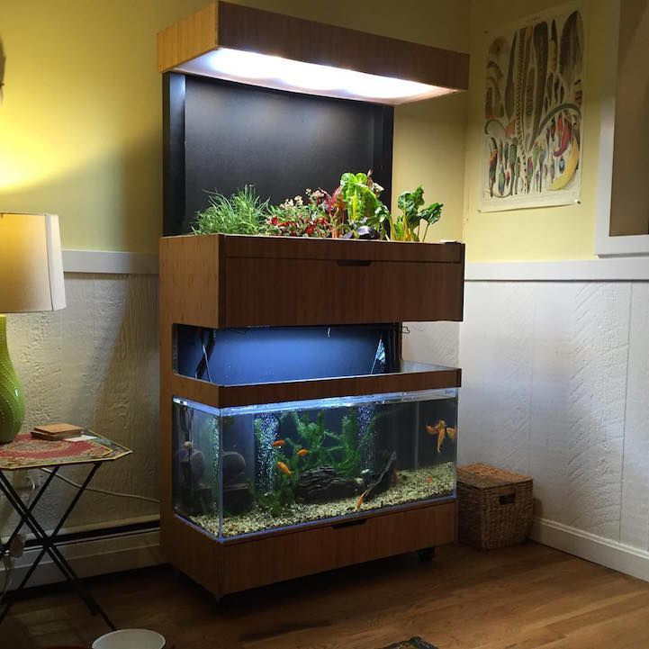 56 best mini aquaponics images on pinterest hydroponics for Eco indoor garden house