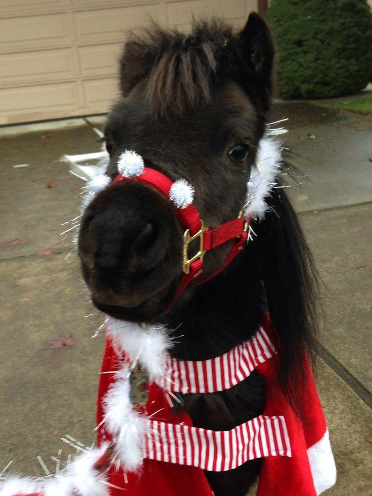 Holiday Horse Costumes? - Miniature Horse Forum ...   Mini Horse Costume