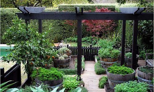 Small urban gardenModern Gardens, Gardens Ideas, Gardens Architecture, Barrels Planters, Gardens Inspiration, Wine Barrels, Whiskey Barrels, Gardens Design, Outdoor Design
