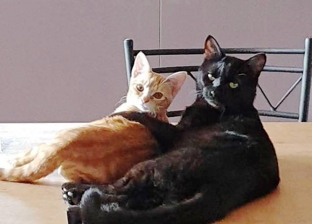 These Two Rescued Kitties Came From Separate Paths They Were