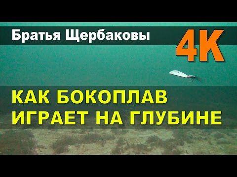 КАК БОКОПЛАВ ИГРАЕТ НА ГЛУБИНЕ (Братья Щербаковы) 4K - YouTube