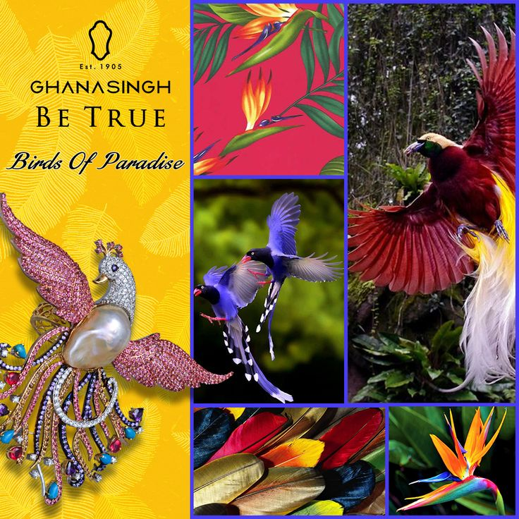 The exoticness of the Birds of Paradise inspired this enchanting bejewelled craft by Ghanasingh Be True to come to life.