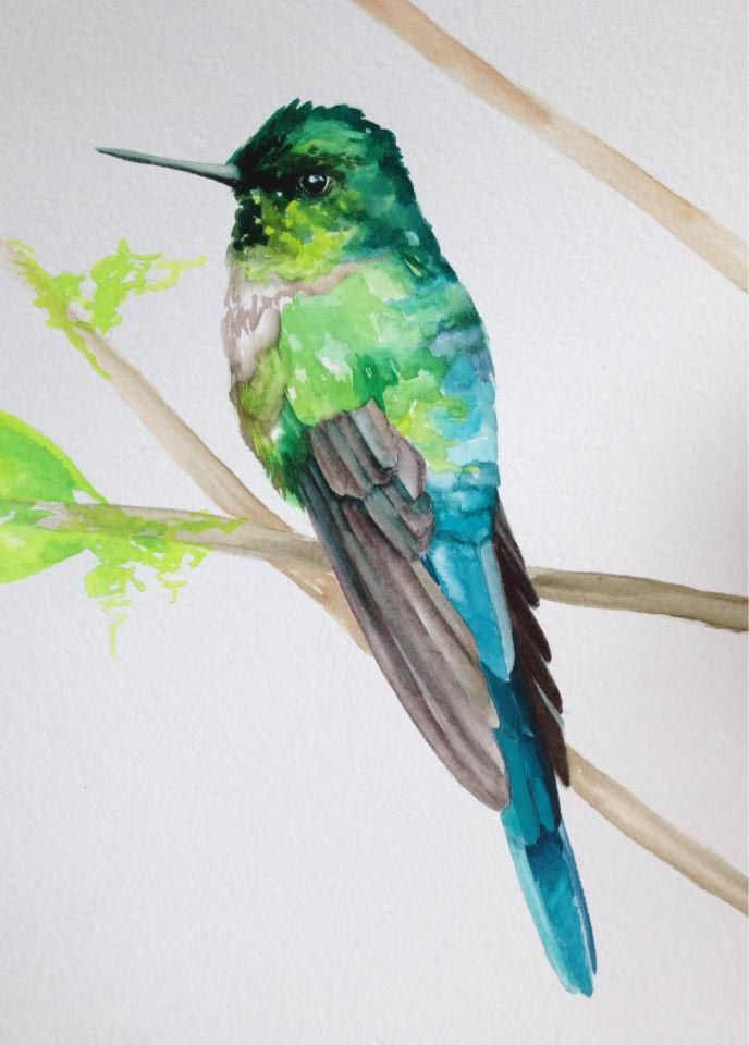 Playing with QoR watercolors - Violet tailed Sylph (Ecuador)  www.amyshawley.com