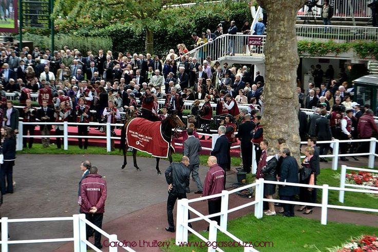 www.pegasebuzz.com | Equestrian photography : Caroline Lhuillery for PegaseBuzz - Qatar Prix de l'Arc de Triomphe 2014, hippodrome Paris Longchamp