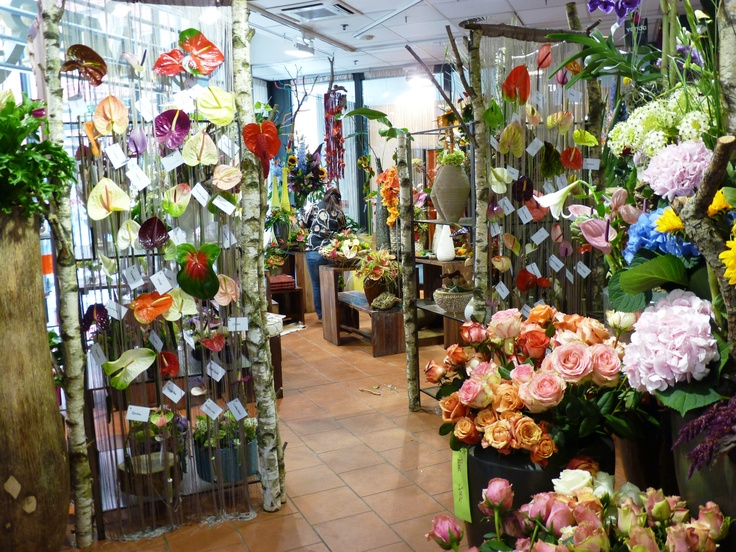Wow! A wall of colourfull Anthuriums in your store. Surpise you customers, with Anthurium. It's just an idea, for a florist.