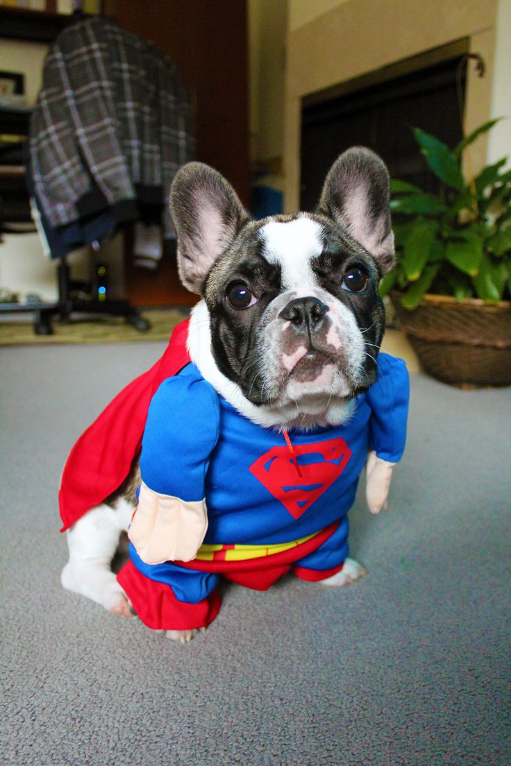 Top 25+ best Puppies in costumes ideas on Pinterest | Dogs in ...