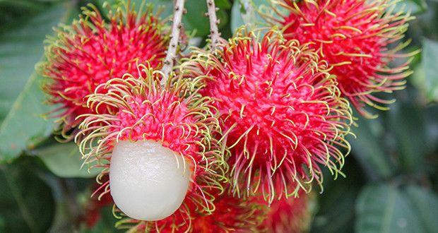 Рамбутан – красивый и полезный тропический фрукт