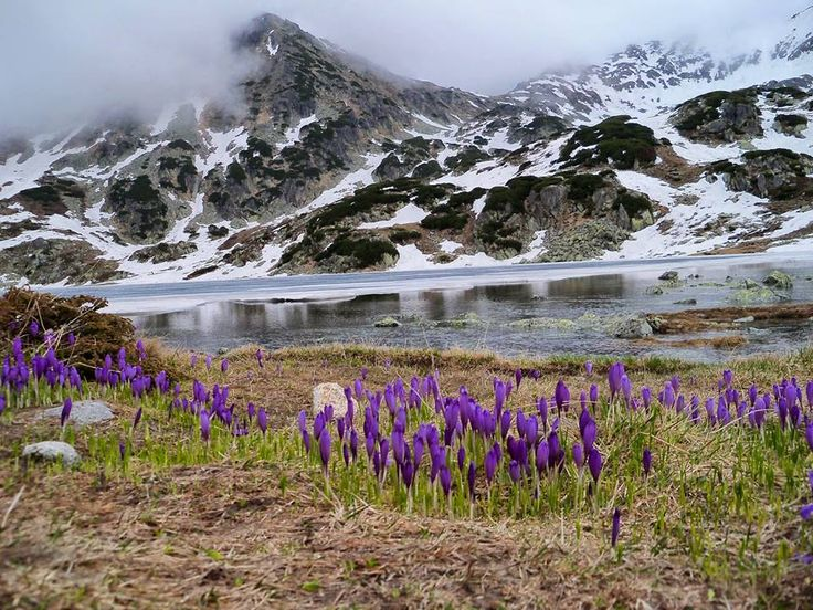 Retezat National Park, Romania