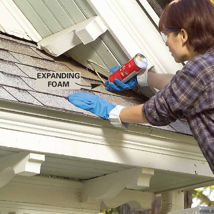 23 best roof maintenance images on pinterest raccoons attic and 11 strategies for do it yourself pest control solutioingenieria Images