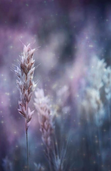 Beautiful magical flowers photograph! How lovely! <pin by Charlotte Henning on Photography>
