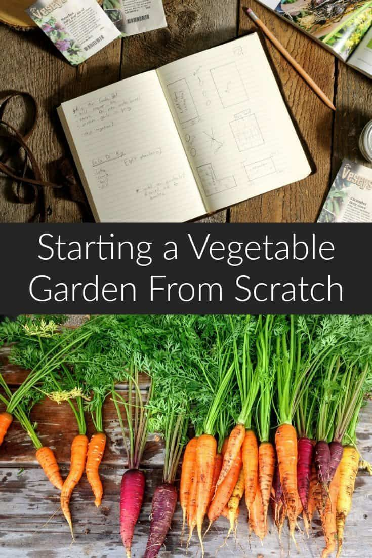 Learn How To Start A Vegetable Garden From Scratch And Become A Successful  Gardener. These Basic Gardening Tips Will Help You Understand Whatu2026