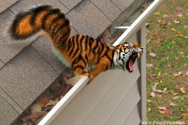 Funny-Photoshopped-Animals-Funny-Photoshop-Animal-022-FunnyPica.com_.jpg (640×426)