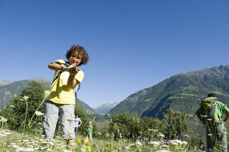 Traumbedingungen für Kinder auf blühenden Almwiesen