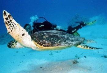 Djibouti : plongée sous marine et développement touristique » plongee sous-marine