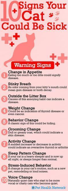♥ Cool Pet Care ♥ It's better to be safe than sorry! Check out Dr. Phil Zeltzman's top 10 signs your cat could be sick!