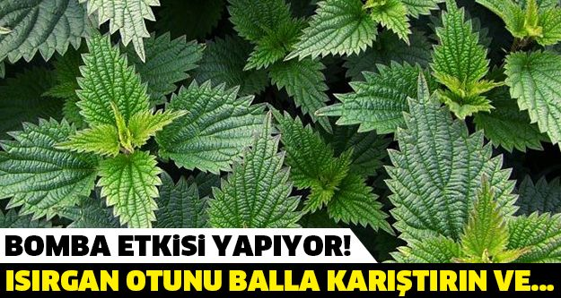 BALLA KARIŞTIRILAN ISIRGAN OTU BOMBA ETKİSİ YAPIYOR!