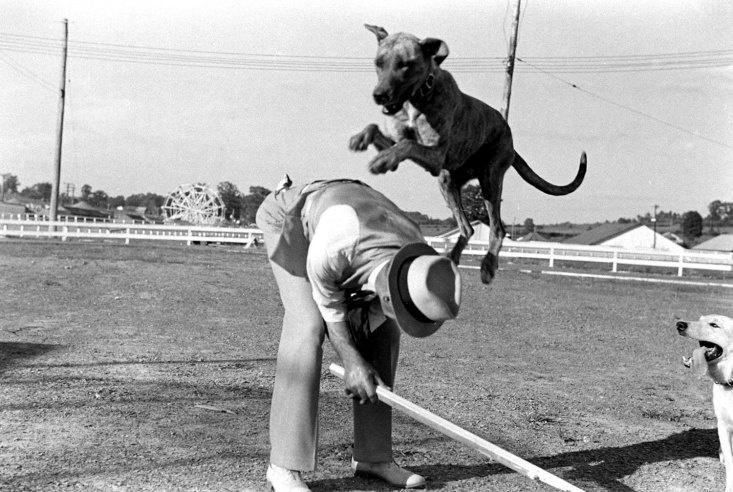 alfred eisenstaedtWest Virginia, Alfred Eisenstaedt, County Fair, Life Magazines Photos, Fair 1938, Virginia County, Culture, Animal, Life Com