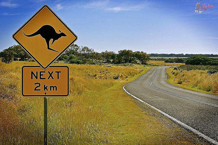 road-trip : panneau-kangourou-australie