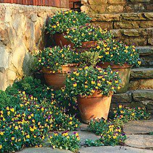 100 Creative Container Gardens | Violas | SouthernLiving.com