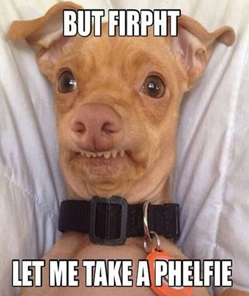 Funny Pictures of Dogs with Captions Ideas | Best Funny Sites to Make You LOL