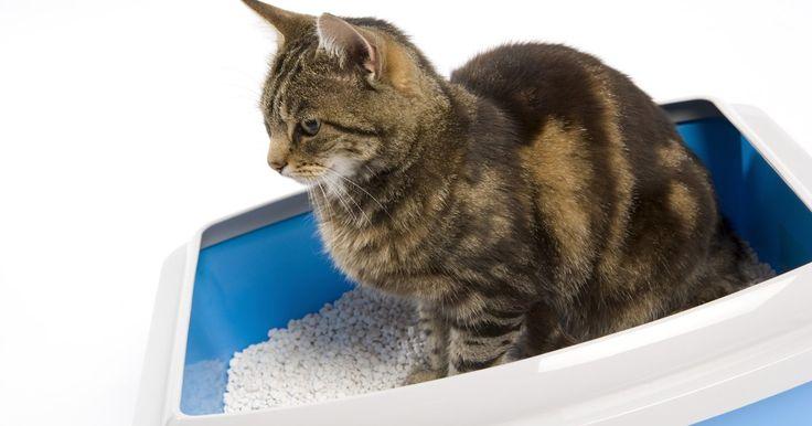 Trucos para deshacerse del olor a orina de gato