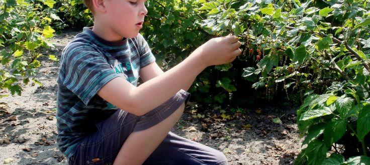 The Gardener's Boy