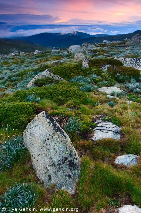 Sunrise in the Snowy Mountains, Kosciusko National Park, Snowy Mountains, NSW, Australia