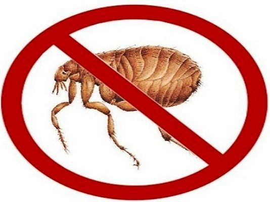 how to get rid of fleas in home without pets