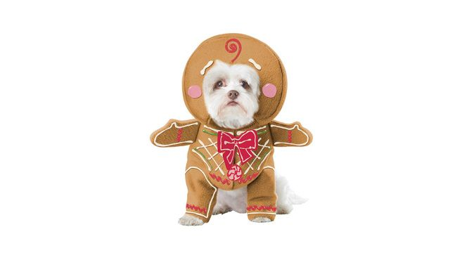 Best dog costumes for Christmas and Hanukkah