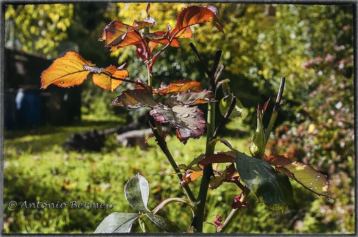 7 best paisajes y jardines images on pinterest gardens - Jardines y paisajes ...