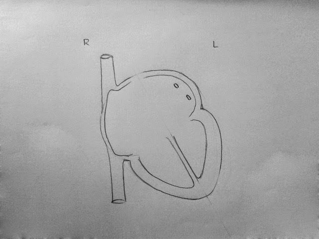 how to draw the heart anatomy