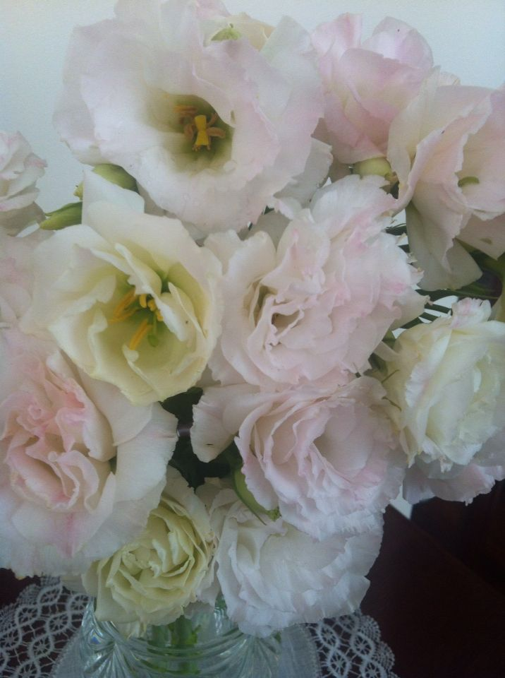 Pretty pastel Lisianthus picked from my garden