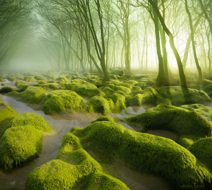 The Moss Swamp by borda The artist says it is located in Romania. I've never heard about it. I'll keep searching.I doubt this for the moment.