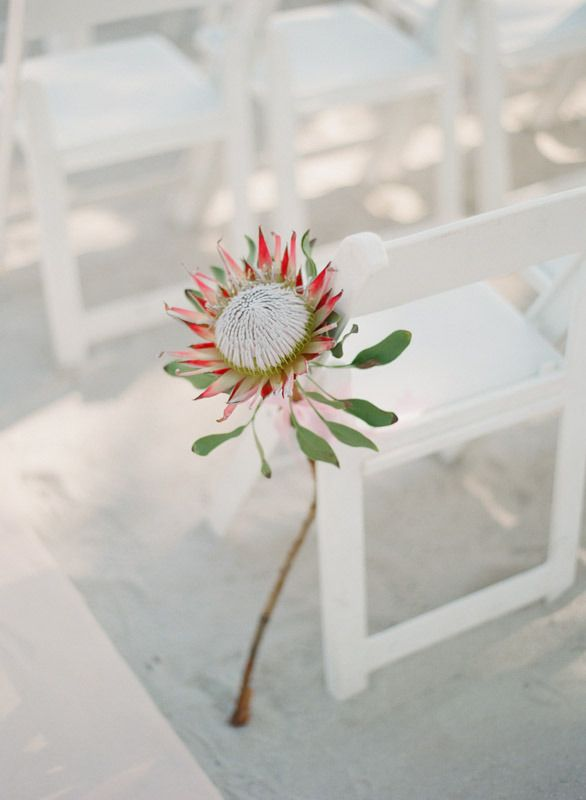 Key West Wedding from Lauren Kinsey  Read more - http://www.stylemepretty.com/2013/10/21/key-west-wedding-from-lauren-kinsey/