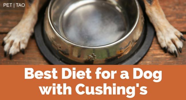 The Best Diet For Dogs With Cushing S Disease Cushings Disease