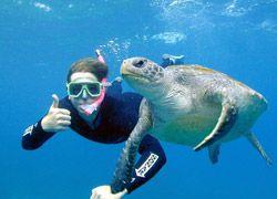 Sea Turtle Snorkel Tours Byron Bay Dive Centre
