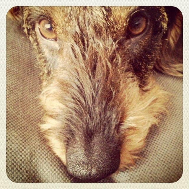 Pippi  http://instagram.com/marcogirolami#