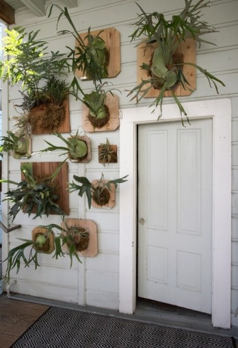 Mounted staghorn ferns. I'd say it's a cruelty-free alternative to taxidermy but I have been known to kill air plants in large quantities.