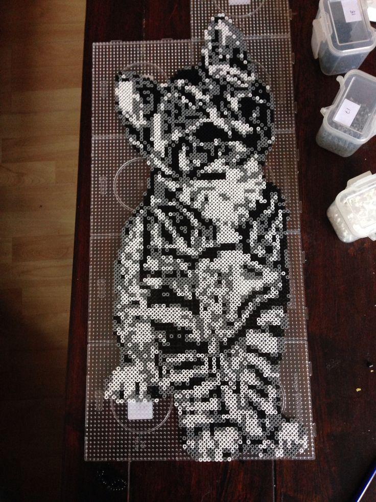 Cat hama perler beads by Dorte Marker - Pattern: https://www.pinterest.com/pin/374291419007212749/