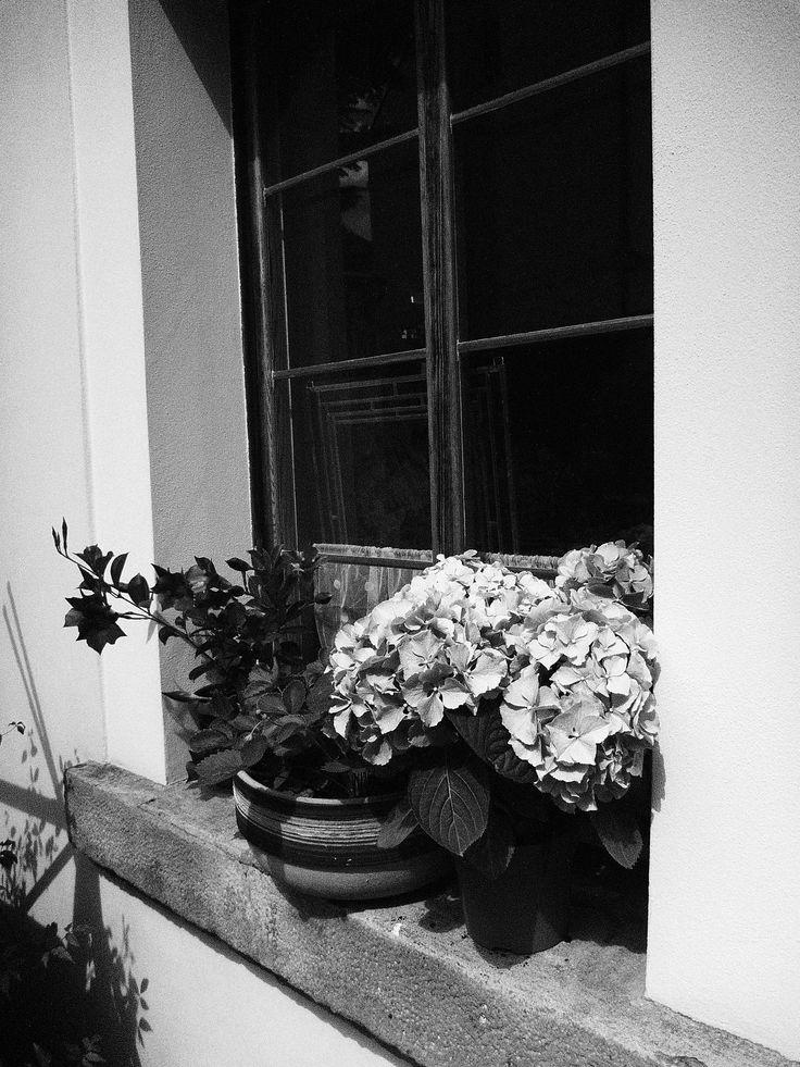 flowers #ANNsPhoto