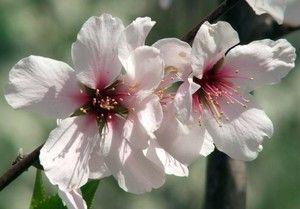 fiori del deserto