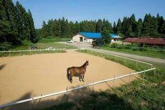 秋田県秋田市のあきた乗馬クラブ 3歳から小学校低学年のお子さま向けのポニーコース小学校高学年から受講可能な体験乗馬コースをご用意しておりますので初めて乗馬を体験する方も安心して楽しめます 親子でもご夫婦でもお友達同士でもみんなで馬と触れ合ってみてください  雨天や冬季間でも屋内練習場がありますので1年中楽しむ事が可能ですよ  tags[秋田県]