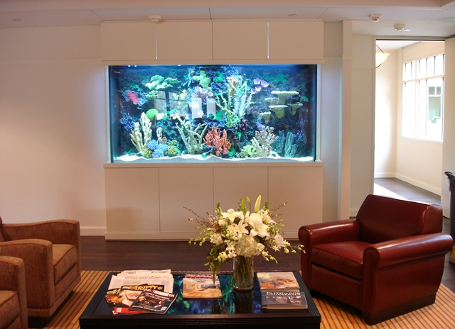 Another acrylic aquarium atm creation dream home for Atm fish tank