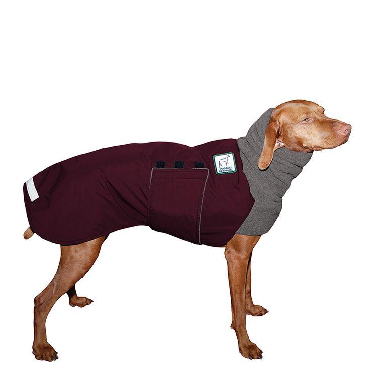 23 best Vizsla images on Pinterest | Haustiere, Vizsla und Hund katze