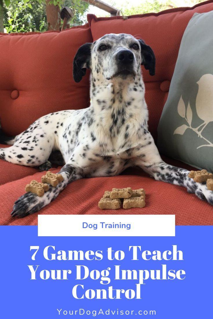 Doggy Zen 7 Games To Teach Your Dog Impulse Control Dog